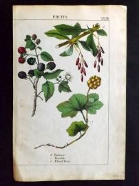 Yonge 1863 Hand Col Botanical Print. Barberry. Bramble. Cloud Berry. Fruit